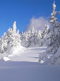 Картинки на телефон 240x320 природа